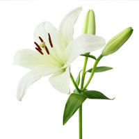 Janis Johnson December 04, 1948 - July 07, 2018 Janis Johnson, 69, of Forest City died Saturday, July 7, 2018, at Good Samaritan Society in Forest City.Funeral services will be held 1:30 P.M. Wednesday, View full obituary